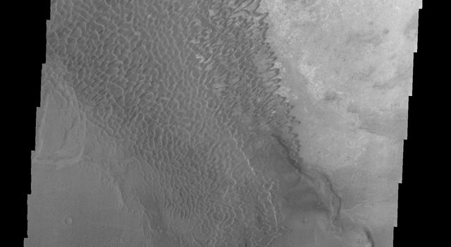 This image from NASA's Mars Odyssey shows the dune field in Nili Patera on Mars.