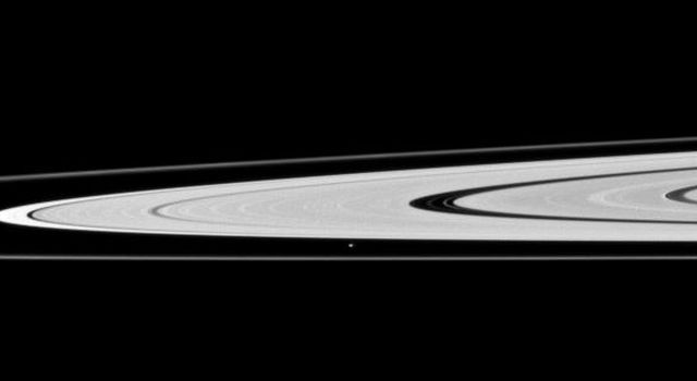 Saturn's moon Atlas, just below the center of this image taken by NASA's Cassini spacecraft, orbits in the Roche Division between the A ring and thin F ring.