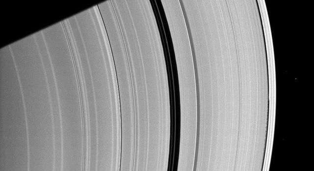 Saturn's moon Daphnis, appearing as a tiny speck in the Keeler Gap of the A ring on the far right of this NASA Cassini spacecraft image, is almost lost among the moon's attendant edge waves.