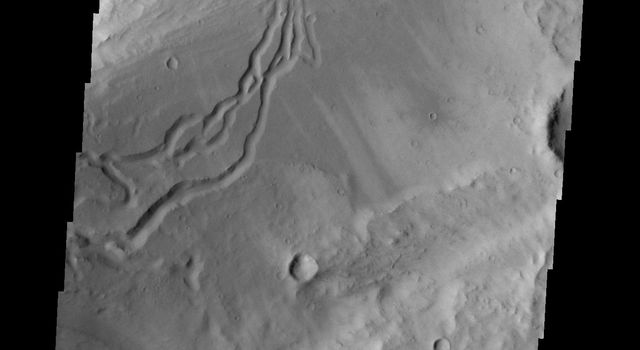 This image taken by NASA's 2001 Mars Odyssey shows secondary channeling on a terrace of the huge Kasei Valles outflow system.