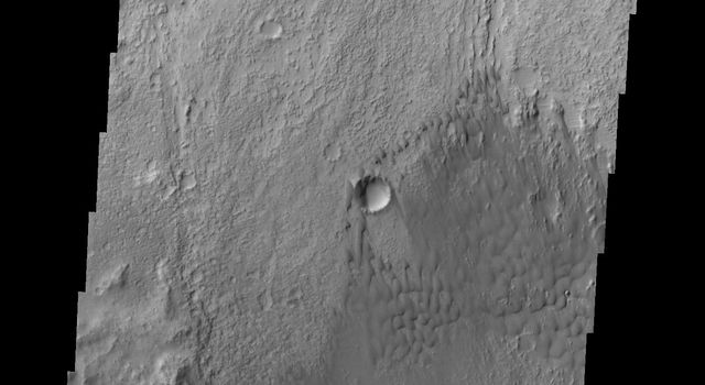 NASA's 2001 Mars Odyssey captured this image of individual dunes located on the floor of Briault Crater.