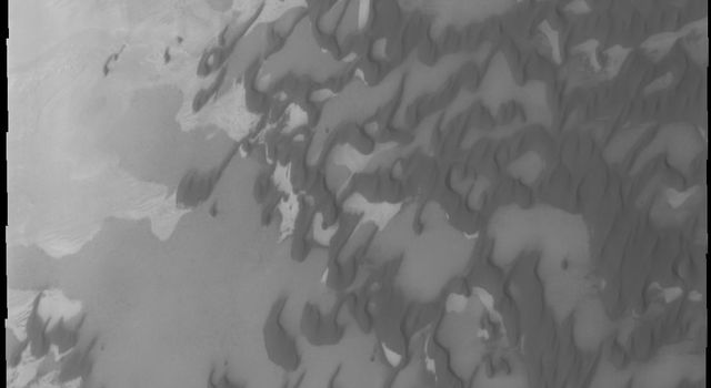 As northern summer approaches on Mars, dunes near the pole defrost and become darker appearing as shown in this image from NASA's Mars Odyssey captured on July 8, 2010.