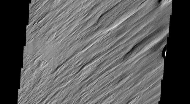One of the most active agent of erosion on Mars today is the wind. This region, near Nicholson crater, has been sculpted by untold years of blowing grit and wind, as shown in this image captured by NASA's Mars Odyssey.