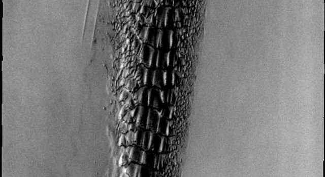 Although this may look like a hostile alien life form, it's actually a complex line of sand dunes near the northern ice cap of Mars. This image is from NASA's Mars Odyssey, one of an 'All Star' set.