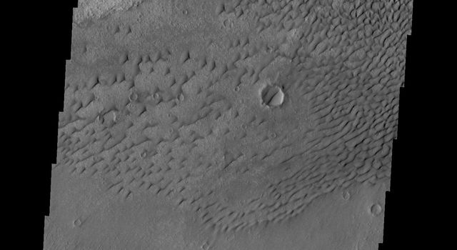 This image from NASA's Mars Odyssey shows dunes on the floor of an unnamed crater west of Herschel Crater.