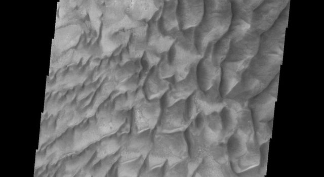 Dunes on the floor of Russell Crater vary from individual dunes, to a large hook shaped, towering sand sheet as seen by NASA's Mars Odyssey.
