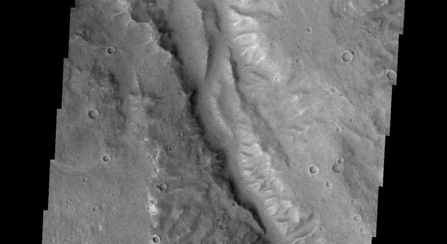 Today's image from NASA's Mars Odyssey is of an unnamed channel in Margaritifer Terra.