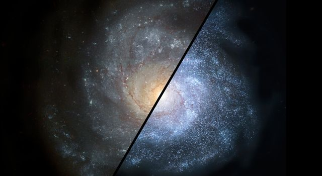 This artist's concept shows how a normal spiral galaxy around our local universe (left) might have looked back in the distant universe, when astronomers think galaxies would have been filled with larger populations of hot, bright stars (right).