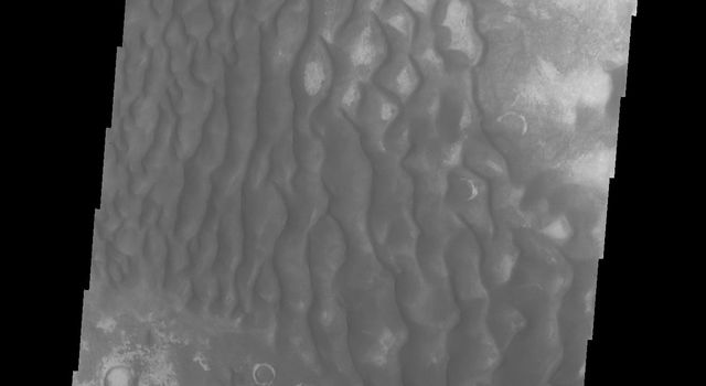 The dunes in this image captured by NASA's Mars Odyssey are located on the floor of Kaiser Crater.