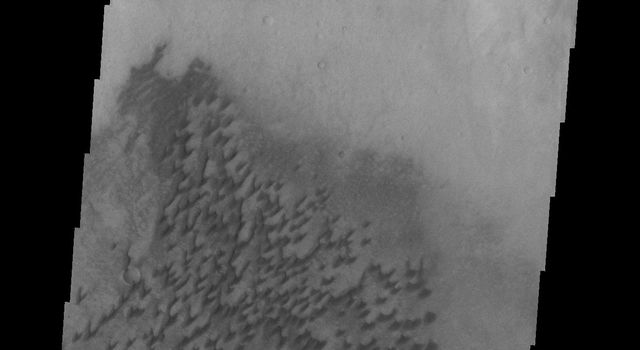 The dunes in this image from NASA's Mars Odyssey are located on the floor of Arkhangelsky Crater.
