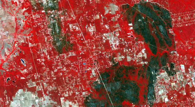The tri-county Riley Road wildfire burning in Texas north of Houston was 85 percent contained when NASA's Terra spacecraft acquired this image on Sept. 12, 2011. Burned areas are dark gray and black; vegetation red; and bare ground and roads light gray.