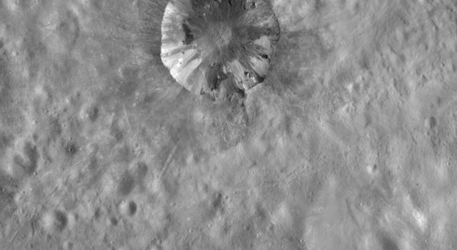This image from NASA's Dawn spacecraft shows Cornelia crater on asteroid Vesta with a sharp, fresh rim. Cornelia crater has a spectacular internal structure, which consists of bright and dark material.