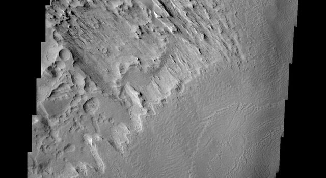 This image NASA's 2001 Mars Odyssey spacecraft of the northwestern end of Gordii Dorsum shows both the dorsum material that has been eroded by the wind, and the edge of the dorsum where it meets Amazonis Planitia.