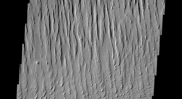 The north/south trending parallel hills and valleys in this image captured by NASA's 2001 Mars Odyssey spacecraft were created by wind erosion and are called yardangs. These yardangs are located in Zephyria Planum.