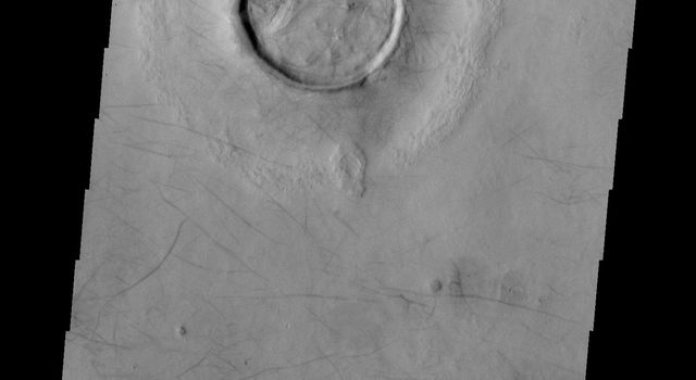 The dark surface markings in this image from NASA's Mars Odyssey spacecraft are dust devil tracks. These tracks are located in Utopia Planitia on Mars.
