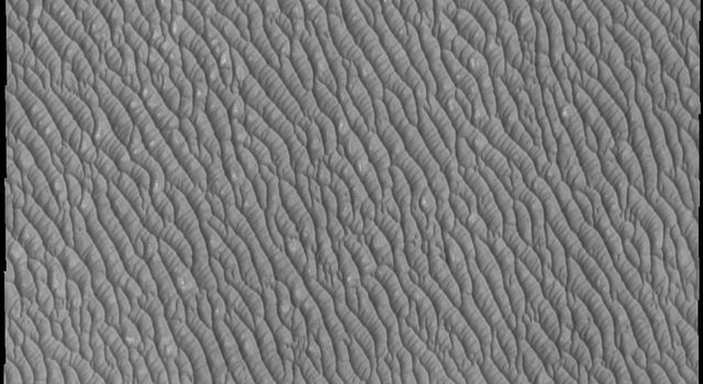 The dunes in this image captured by NASA's Mars Odyssey spacecraft are just a small portion of the dune field that encircles part of the north pole of Mars.