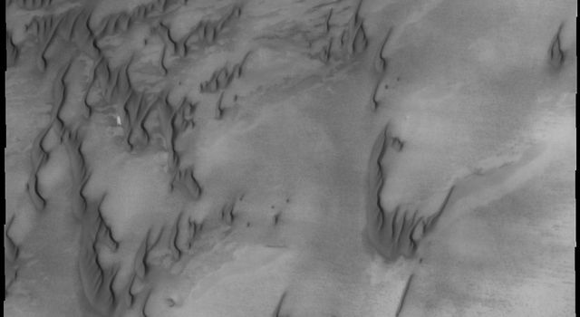 The dunes in this image from NASA's Mars Odyssey spacecraft are part of the dune field that encircles a large portion of Mars' northern pole. Less sand available in this region of the dune field, resulting in individual dunes.