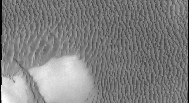 This image captured by NASA's 2001 Mars Odyssey spacecraft shows a small portion of Olympia Undae, the largest dune field near the north polar cap.
