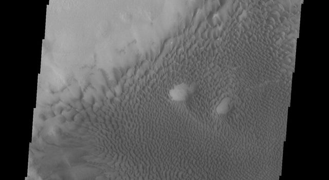 The sand dunes in this image captured by NASA's 2001 Mars Odyssey spacecraft are located on the floor of Lyot Crater.