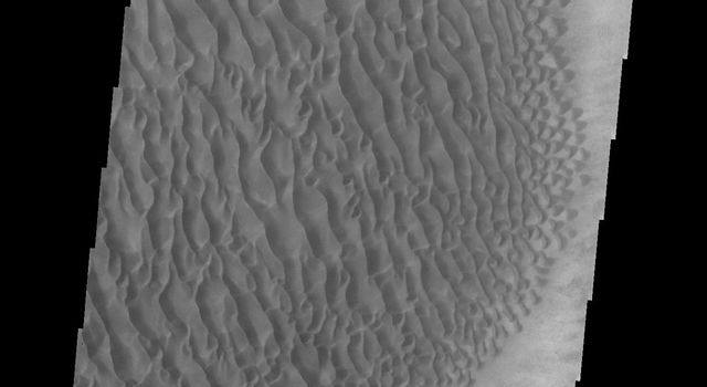 This image from NASA's 2001 Mars Odyssey spacecraft shows part of the large sand sheet and surface dune forms on the floor of Proctor Crater.