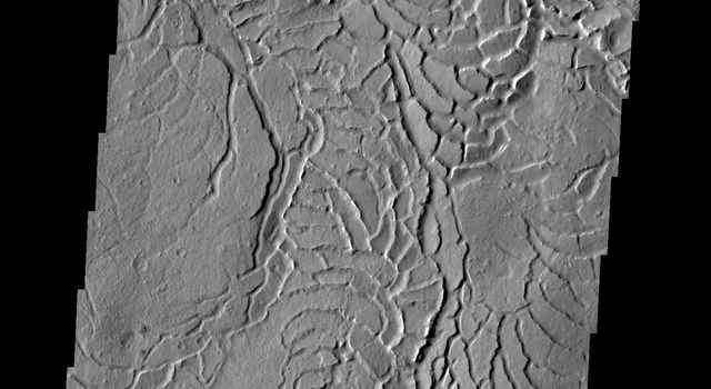 The arcuate or curved fractures in this image are located on the eastern margin of Elysium Planitia as seen by NASA's 2001 Mars Odyssey spacecraft.