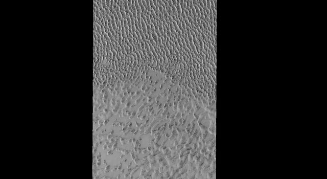 This image from NASA's 2001 Mars Odyssey spacecraft shows dunes near the north polar cap of Mars. It is springtime at the north pole and the dunes are starting to lose their frost cover.