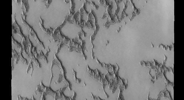 This image shows a portion of the north polar dune field where there has been more frost lost from the dunes. This image is from NASA's 2001 Mars Odyssey spacecraft.