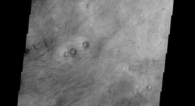 This image shows a different part of Utopia Planitia than yesterday's image. Both are marked with hundreds of dust devil tracks as seen by by NASA's 2001 Mars Odyssey spacecraft.