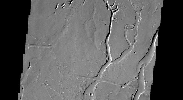 The channels and depressions seen in this image from NASA's 2001 Mars Odyssey spacecraft are part of Gordii Fossae, located on the volcanic plains between Olympus Mons and Gigas Sulci.