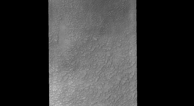 This image from NASA's Mars Odyssey spacecraft shows some of the dunes that are located near the north polar cap. This region of dunes is part of Siton Undae.