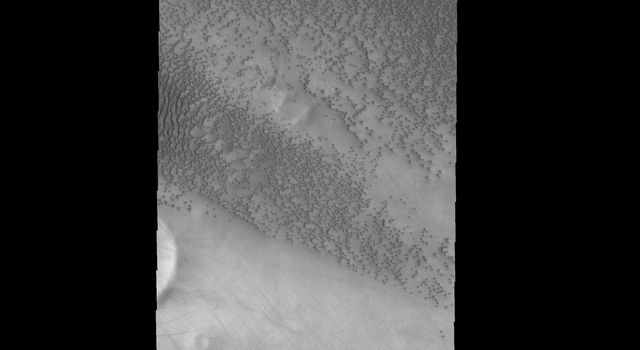 In the lee of this unnamed crater there are no dunes, but numerous dust devil tracks. Dunes surround the crater, except for the lee area, as shown in image from NASA's Mars Odyssey spacecraft.