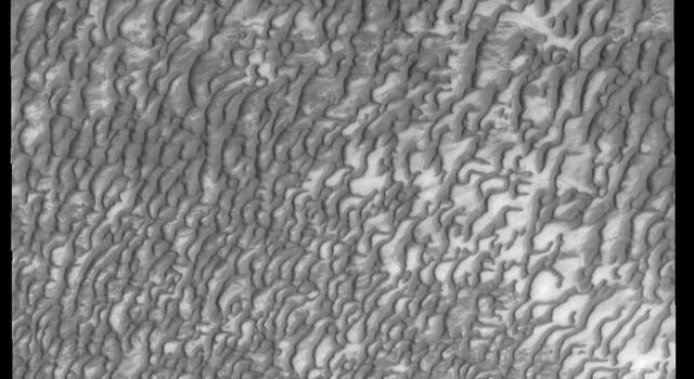Now that summer has arrived in the northern hemisphere of Mars, the dunes near the polar cap have shed all their winter frost, as shown in this image from NASA's 2001 Mars Odyssey spacecraft.