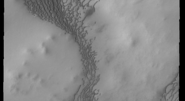 This image from NASA's 2001 Mars Odyssey spacecraft shows dunes forming in the lower elevations of part of Olympia Undae on Mars.