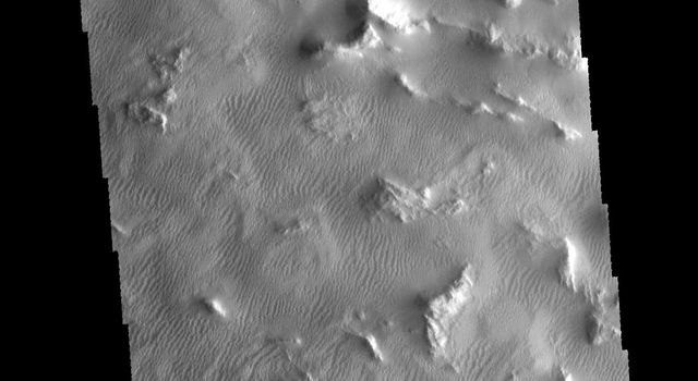 The region shown in this image captured by NASA's 2001 Mars Odyssey spacecraft is part of Gigas Sulci.