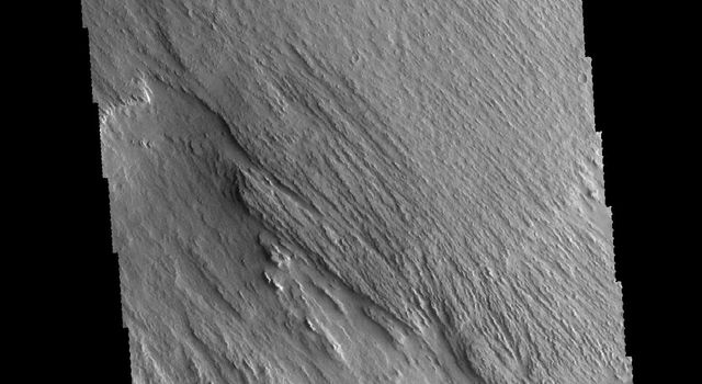 This image from NASA's 2001 Mars Odyssey spacecraft shows a region near Memnonia Sulci, which has been eroded by the wind to form linear ridges called yardangs. The two prominent directions of wind are recorded by the two directions of the ridges.