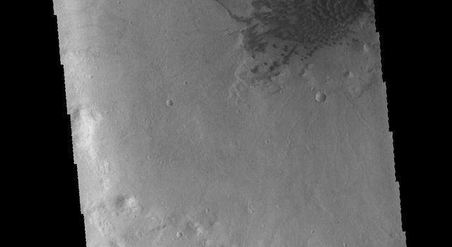 This image from NASA's 2001 Mars Odyssey spacecraft shows a field of sand dunes located on the floor of this unnamed crater in Terra Cimmeria. Several gullies dissect the northern rim of the crater.