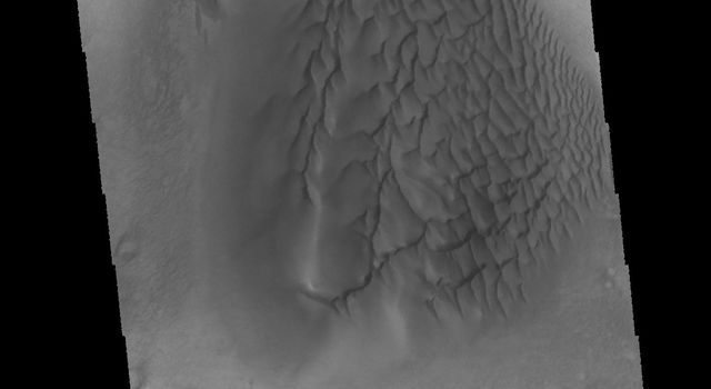 This VIS image captured by NASA's 2001 Mars Odyssey spacecraft was collected at the same time as yesterday's IR image. The dunes are darker in visible wavelengths than the surrounding material.