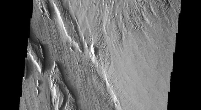 This image captured by NASA's 2001 Mars Odyssey spacecraft show long term winds have etched the surface in Memnonia Sulci. Partial cemented surface materials are easily eroded by the wind, forming linear ridges called yardangs.