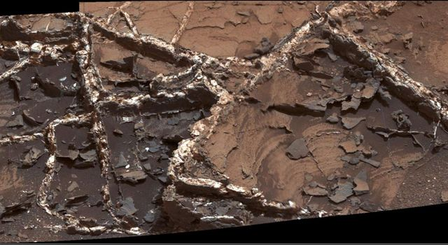 Prominent mineral veins at the 'Garden City' site examined by NASA's Curiosity Mars rover vary in thickness and brightness, as seen in this image from Curiosity's Mast Camera (Mastcam).