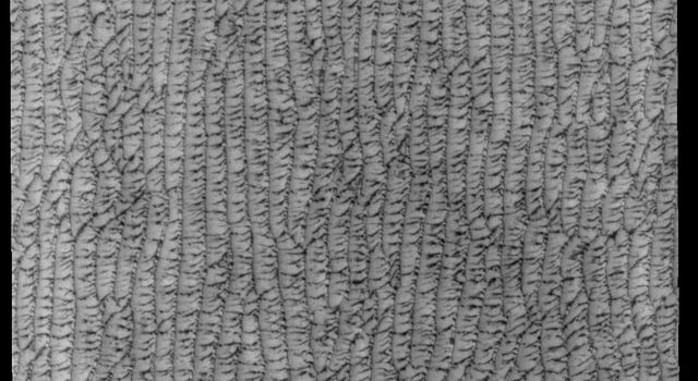 This image captured by NASA's 2001 Mars Odyssey spacecraft shows part of Olympia Undae, a large sand sea located near the north polar cap.