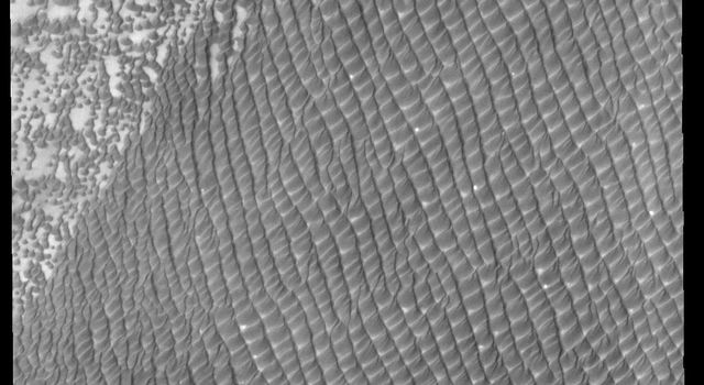 This image captured by NASA's 2001 Mars Odyssey spacecraft shows part of Hyperboreae Undae, which is located between Escorial Crater and the margin of Chasma Boreale.