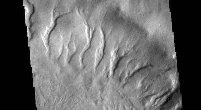 This image from NASA's 2001 Mars Odyssey spacecraft shows numerous large gullies dissect the inner rim of this unnamed crater in Noachis Terra.