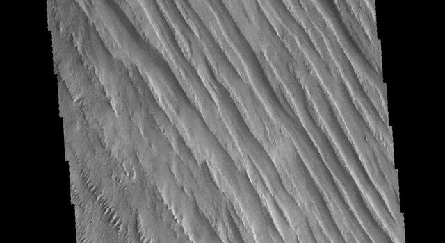 This image captured by NASA's 2001 Mars Odyssey spacecraft shows some of the extensive wind etched terrain in Memnonia Sulci, located south west of Olympus Mons.