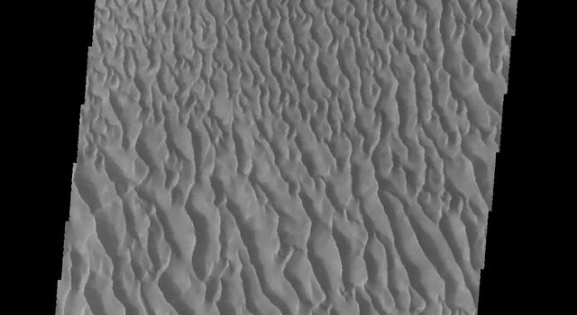 This image captured by NASA's 2001 Mars Odyssey spacecraft shows a portion of the dune sheet and other dune forms on the floor of Proctor Crater.
