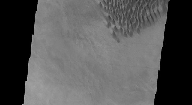 This image captured by NASA's 2001 Mars Odyssey spacecraft shows individual dunes on the floor of Russell Crater. These dunes are in the southern part of the dune field.