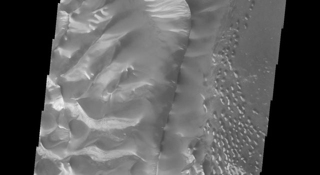 This image captured by NASA's 2001 Mars Odyssey spacecraft shows the central part of the dune field on the floor of Russell Crater, including the large dune ridge.
