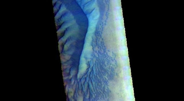 This false color image from NASA's 2001 Mars Odyssey spacecraft shows the western part of the dune field on the floor of Russell Crater.