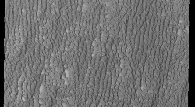 This image from NASA's 2001 Mars Odyssey spacecraft shows Siton Undae, a large dune field located in the northern plains near Escorial Crater on Mars. This image shows part of the eastern region of the dune field.