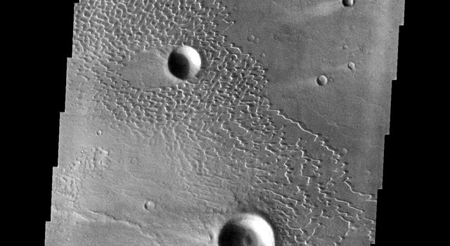 This image captured by NASA's 2001 Mars Odyssey spacecraft shows part of the dune field near Meroe Patera. The paterae are calderas on the volcanic complex called Syrtis Major Planum.