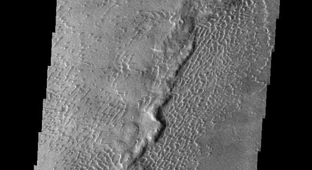 This image from NASA's 2001 Mars Odyssey spacecraft shows part of the dune field near Meroe Patera. The paterae are calderas on the volcanic complex called Syrtis Major Planum.